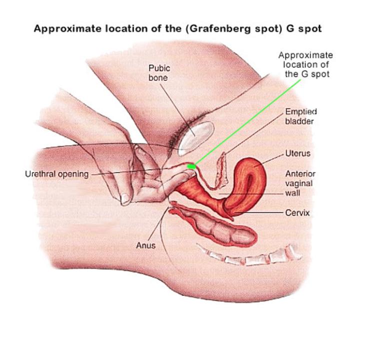 g punkt norwegian girl porn