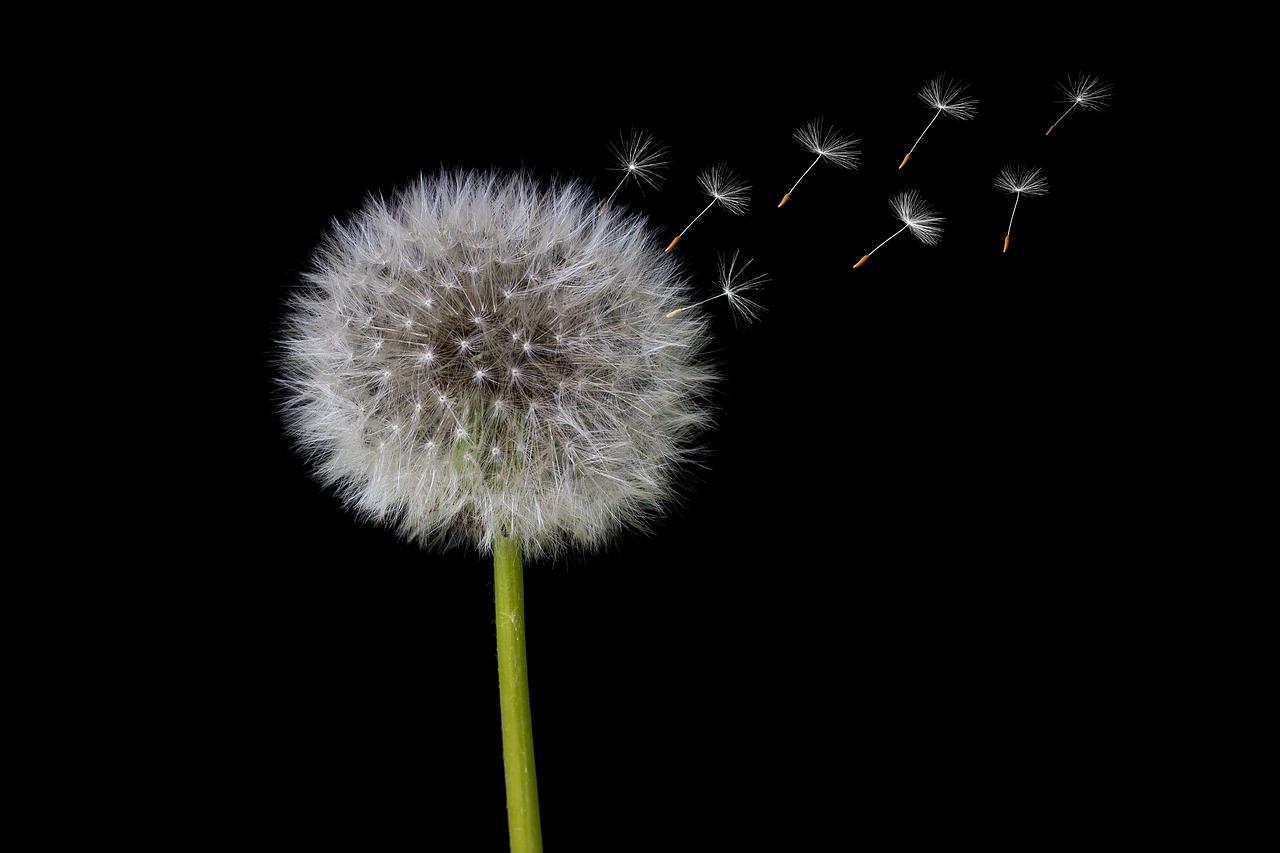 Lepsze nasienie wiosną - naukowcy dowiedli, że pora roku ma wpływ na jakość nasienia