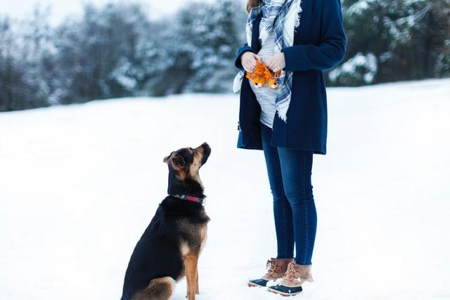 Pies a poronienie